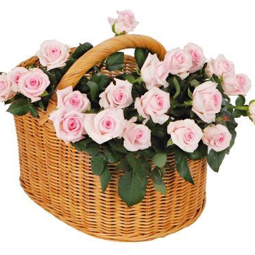 Roses et Fleurs de toute sorte ...