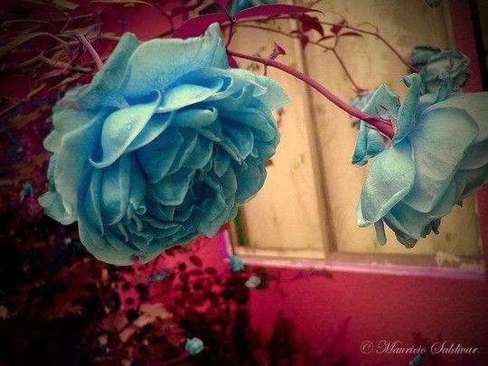 De Jolies Fleurs pour Vous!!