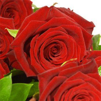 roses et fleurs de toutes sortes