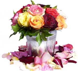 Roses et Fleus de toutes sortes
